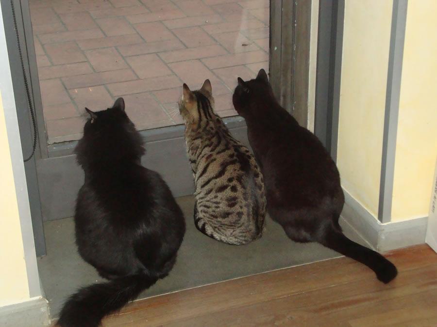 Curiosità felina